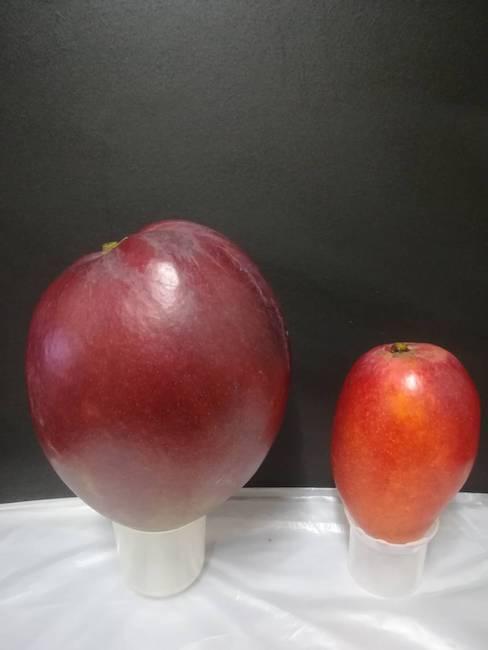 レッドキーツとアップルマンゴーの比較